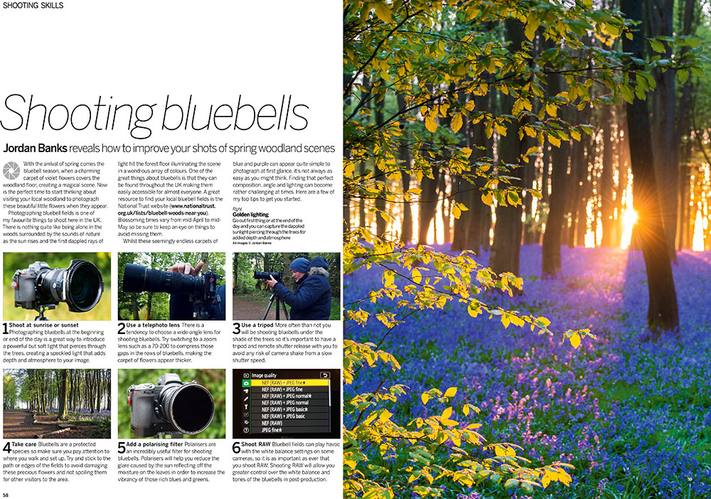 Photographing Bluebells