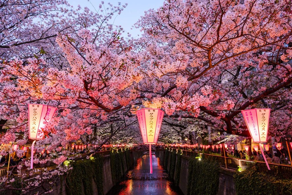 Japan Cherry Blossom Photography Guide