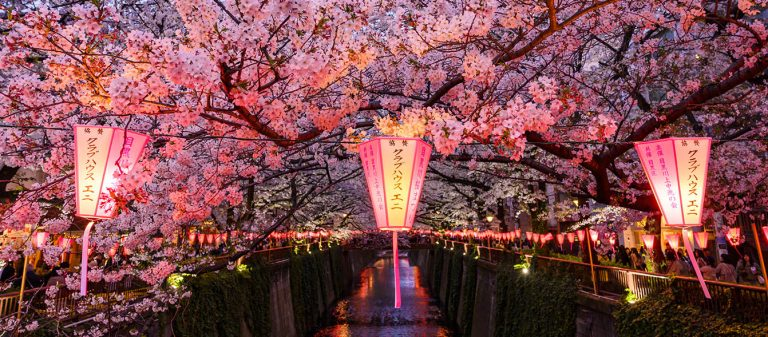 Japan Cherry Blossom Photography